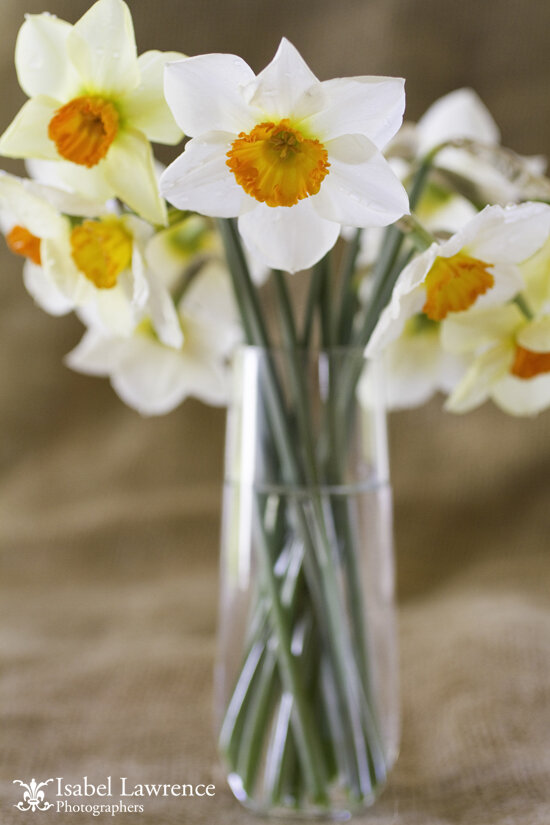 isabellawrence_0083_daffodils